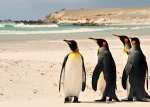 viagem-às-ilhas-malvinas concurso embaixada falkland estudantes