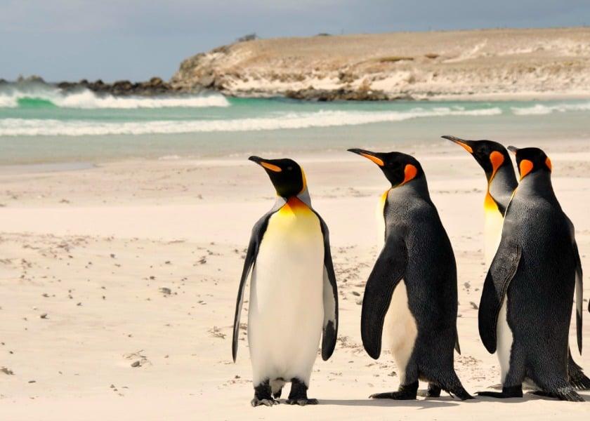 viagem às Ilhas Falkland com tudo pago concurso embaixada falkland estudantes