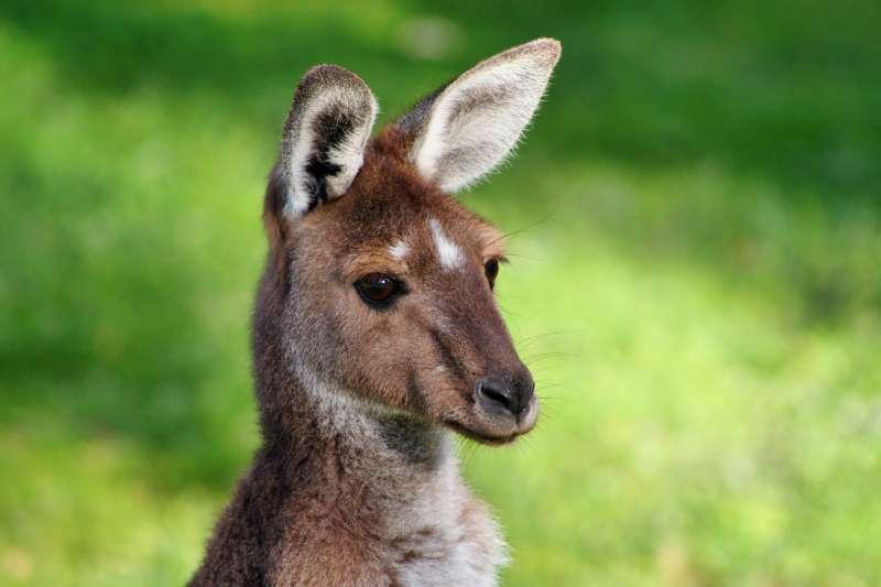 bolsas para graduacao na australia partiu intercambio