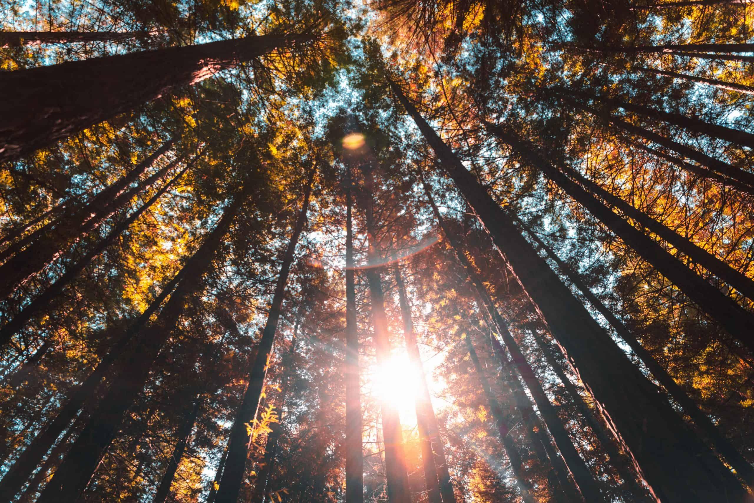 mestrado em ciências florestais meio ambiente epos alemanha