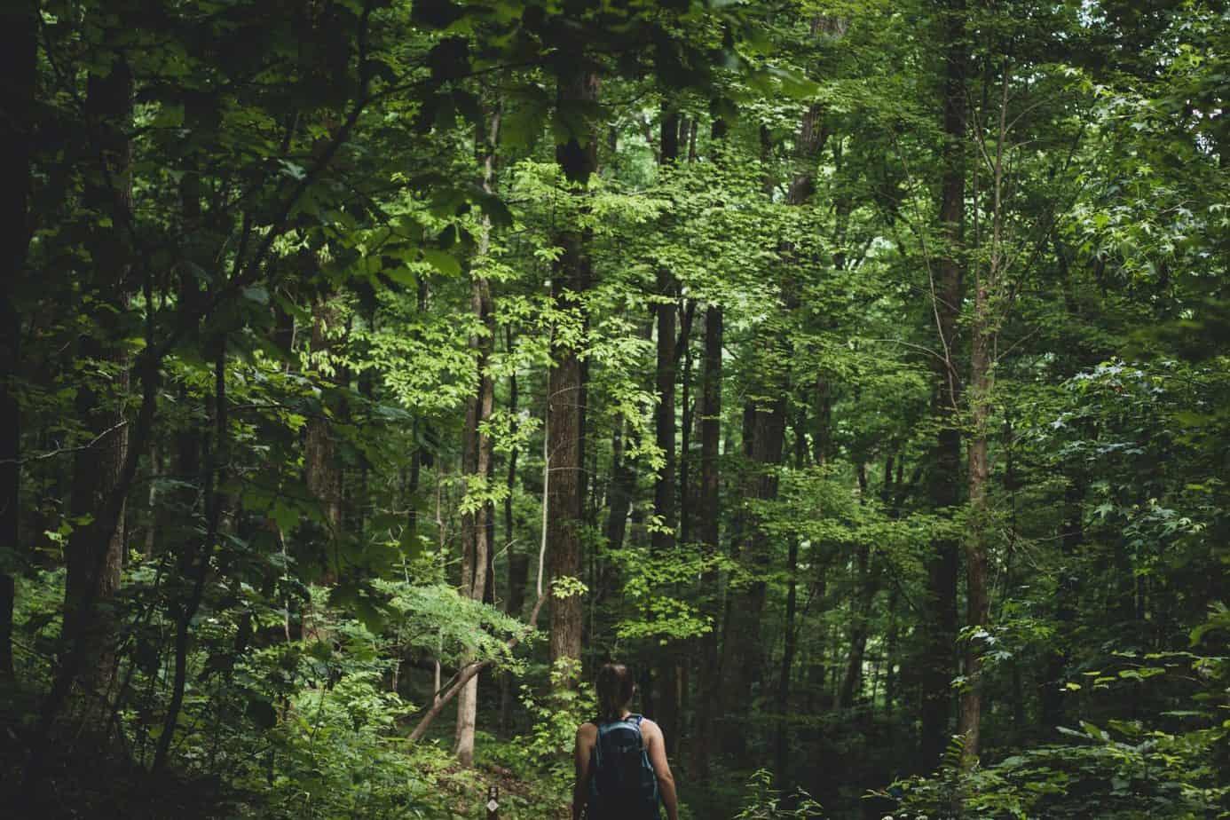 mestrado em engenharia florestal epos alemanha daad
